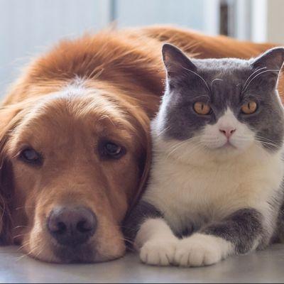 Reparto veterinaria - Farmacia Trisoglio